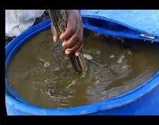 Azolla based liquid fertilizer (Azolla based jeevamrut).